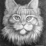 graphite pencil drawing, tabby cat, karla bailey art
